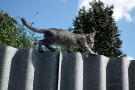 kitten balancing