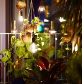 At night a room with potted and hanging plants is lit by hanging lights.