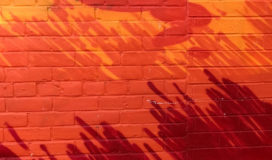 Red brick wall with shadow of plants